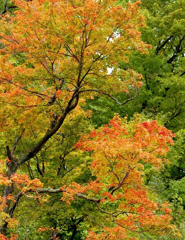TreesRavine.jpg