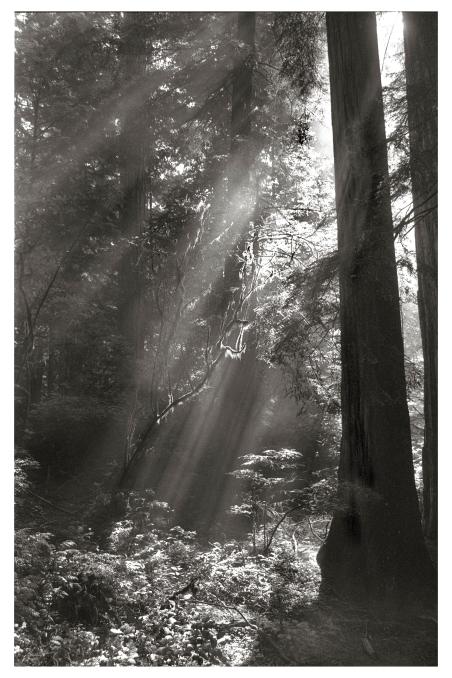 Redwoods3Print.jpg