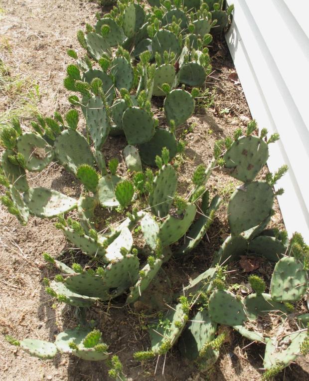 CactusSpring2.jpg