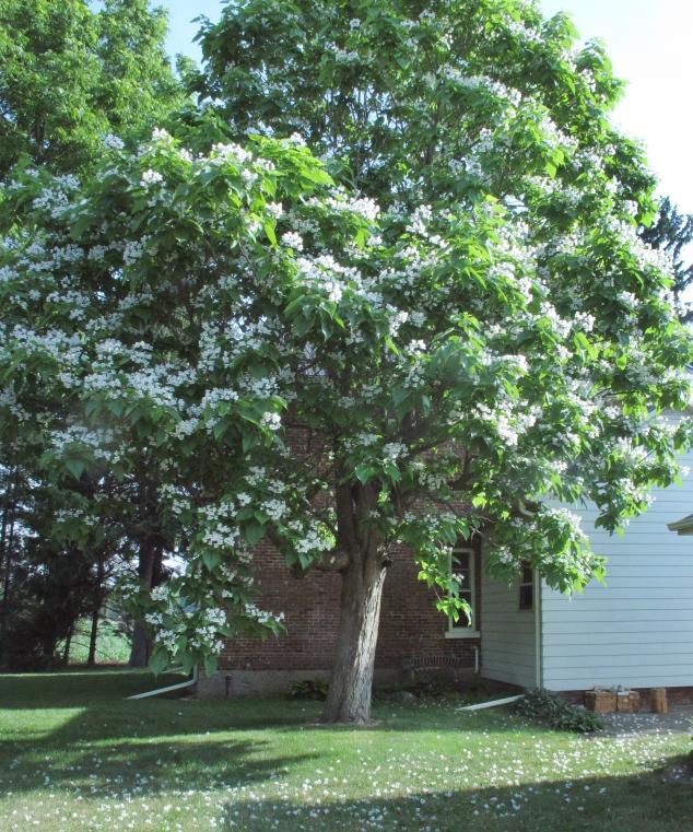 TreeBloom.jpg