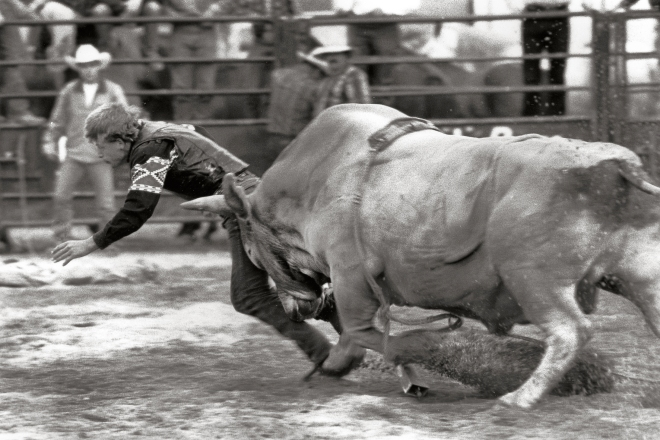 BullGore.jpg